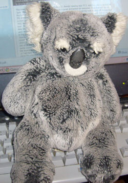 , Searching – KB Toys KOALA BEAR