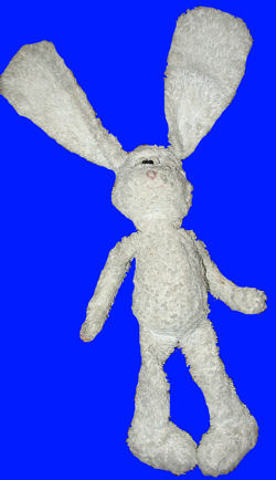 Long Legged White Rabbit with Big Feet
