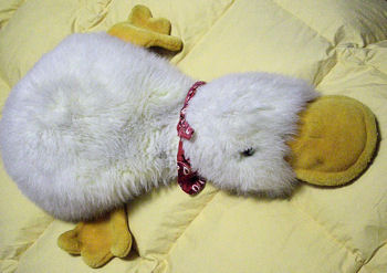 Lying Down White Platypus / Duck with Fine Fur & Yellow Beak & Feet