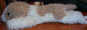 , FOUND – 2000 TY Brown & White SHIH TZU DOG