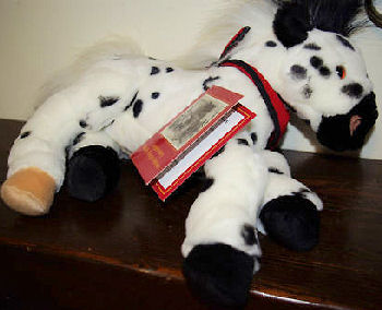 2003 Wells Fargo Billie Black & White Appaloosa Horse