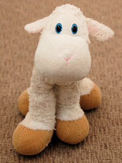 , FOUND – First and Main LANKYDOODLE WHITE LAMB with BIG BROWN FEET
