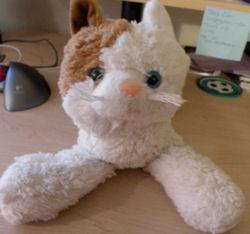 Circo Orange White Cat